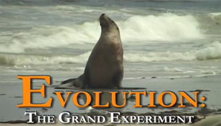 evolution-grand-experimen_headert
