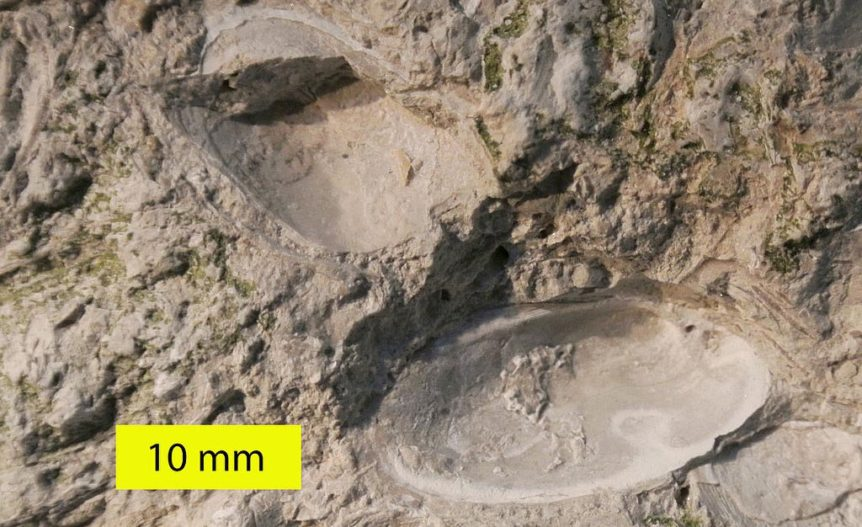 ostracod_fossil