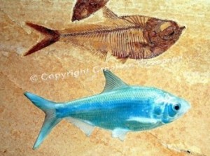 fossilliving-fish_wm-300x223