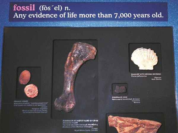 fossil-fake