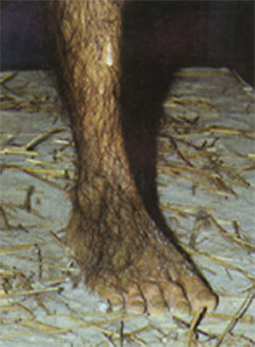 fossil-lucy-foot