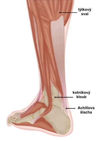 achilles-tendon_lab