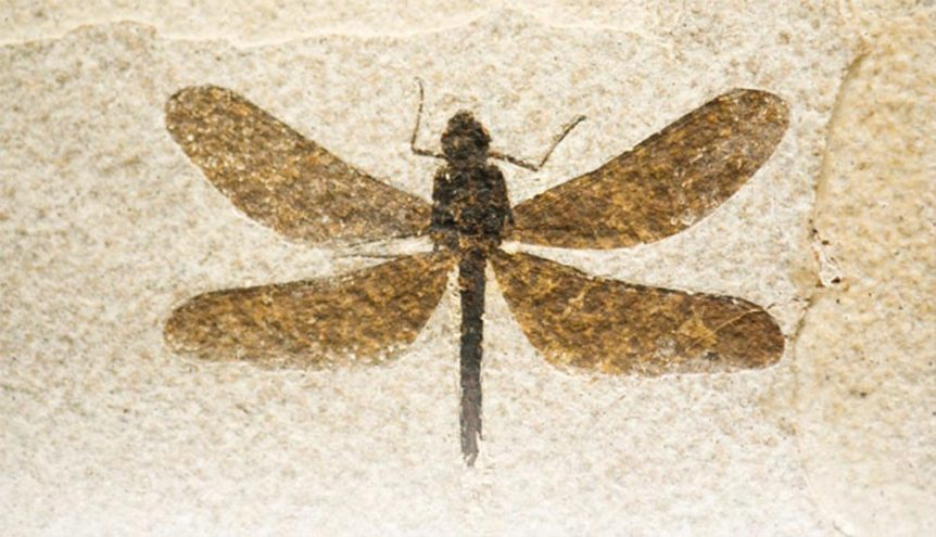 insect-fossilized