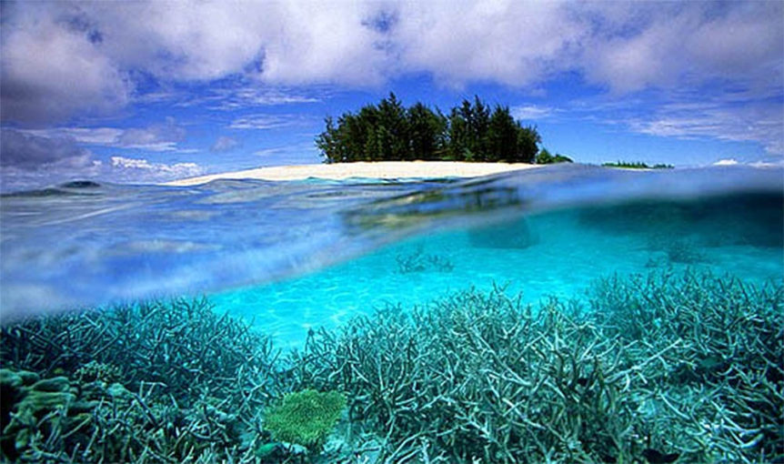 coral-in-reef-lagoon