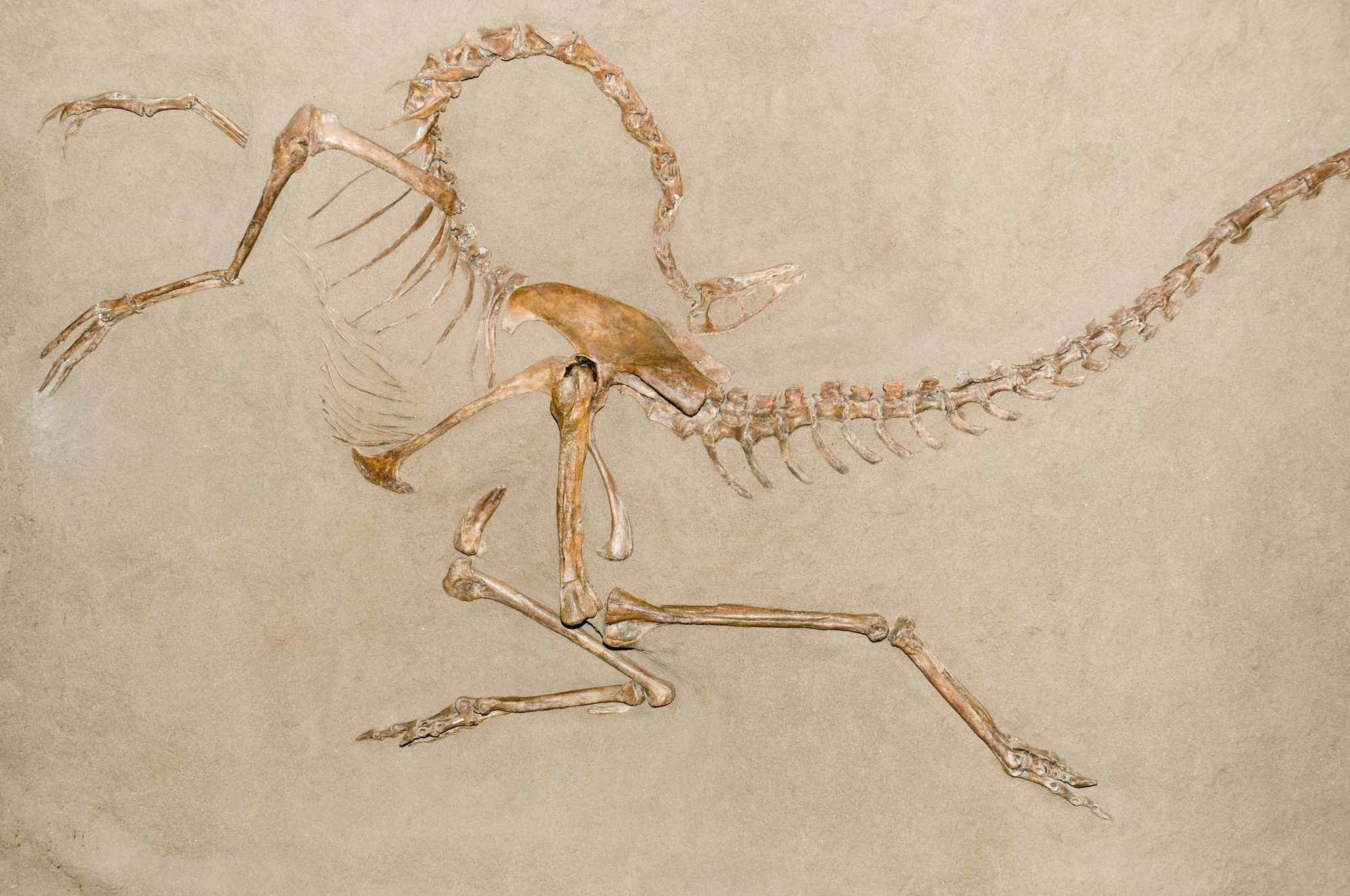 Dino-Death-Pose-Fossil