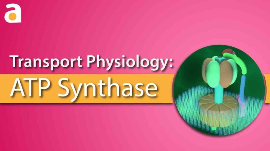 atp-synthase-header